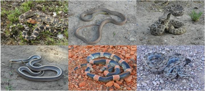 mx_snakes